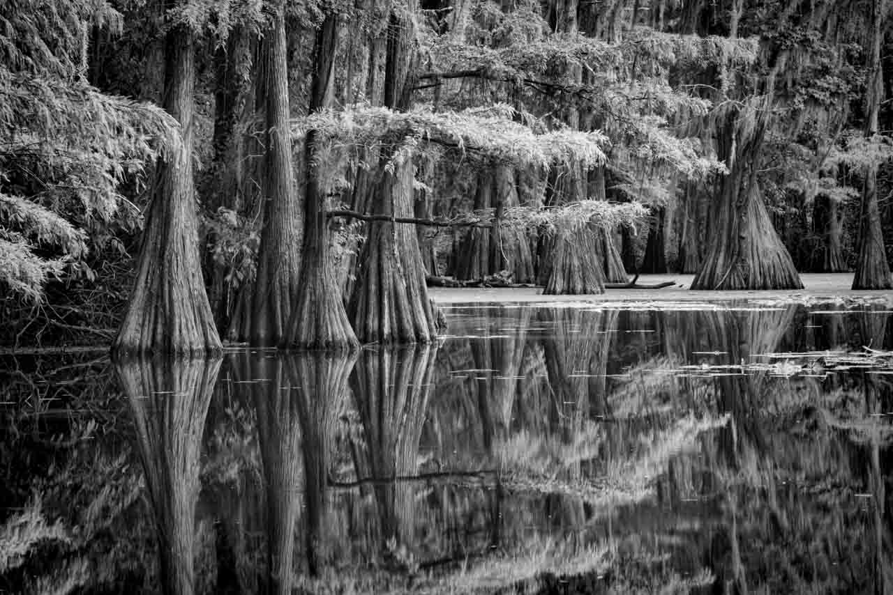Landscape photo project at Caddo Lake in eastern of Texas in United States.