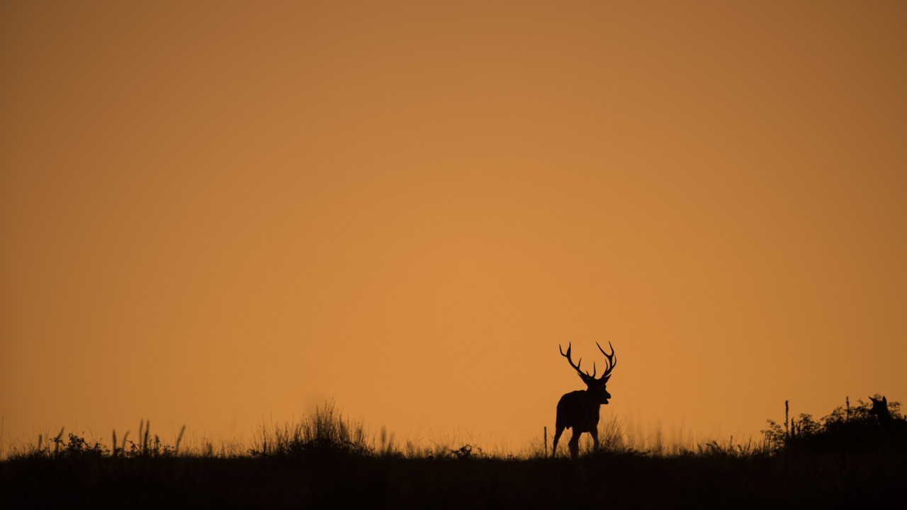Wildlife photo project dedicated to the rut of the deer in France in September/October 2017.
