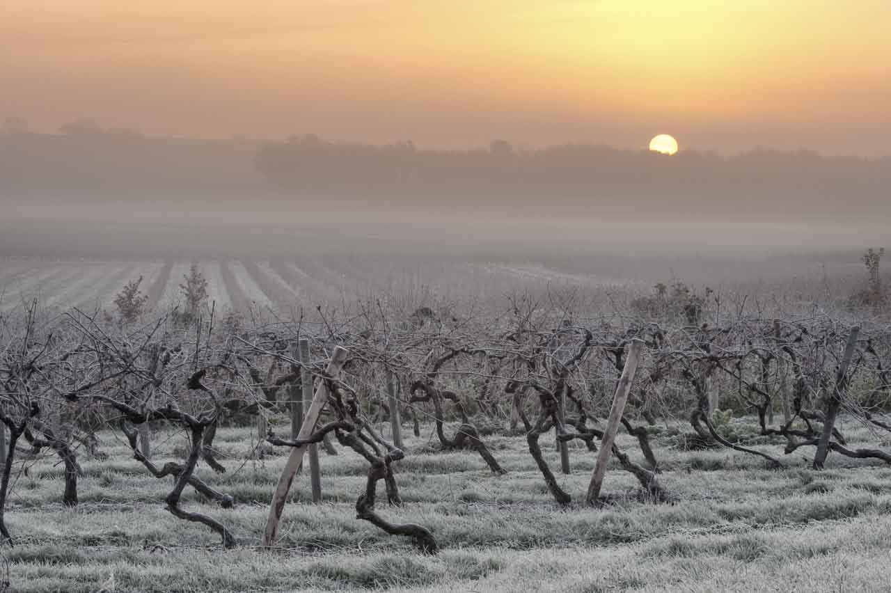 A photo that required  days of preparation and recognition: a vineyard in the fog in winter at sunrise.