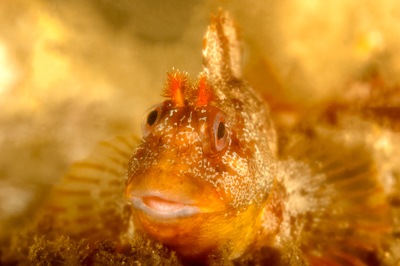 Underwater fauna along the coast of Charente-Maritime in France. Photographs by Isabelle and Amar Guillen.