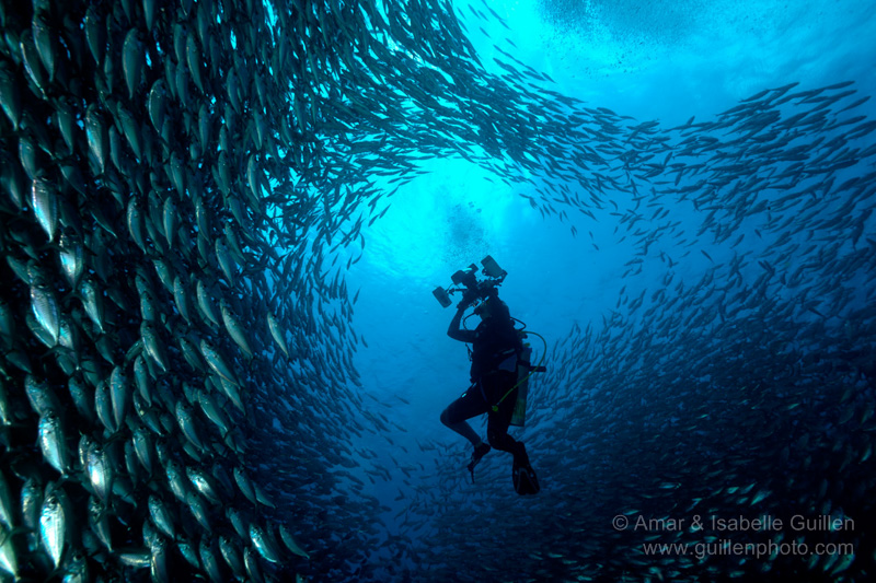 Tarpon sardines run in Bonaire in the southern Caribbean Sea.