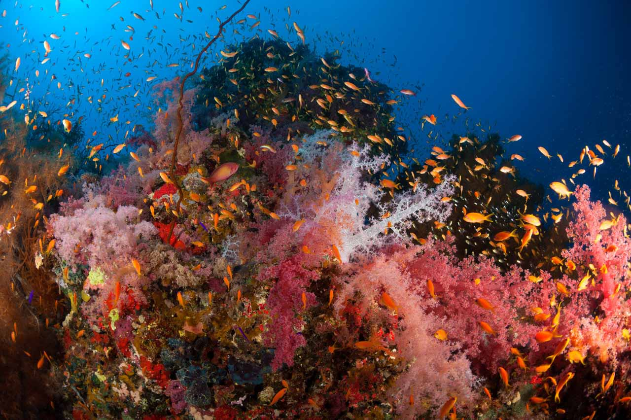 Photographs of underwater sceneries of the Red Sea off Sudan ...