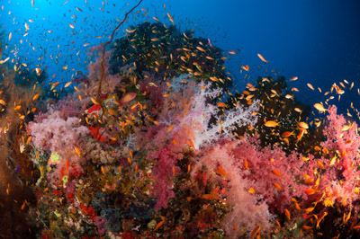 Underwater sceneries in the Red Sea off the coast of Sudan. Photographs by Amar and Isabelle Guillen.