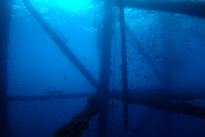 Diving on oil rigs in the Gulf of Mexico off the coast of Texas. Photographs by Amar and Isabelle Guillen.