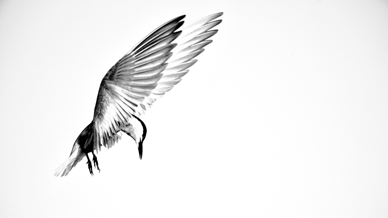 This photograph was created for the collection 'Freedom'.
