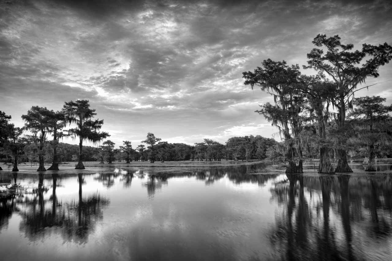 Landscape of Caddo Lake in Texas. Bald Cypress growing in the lake.