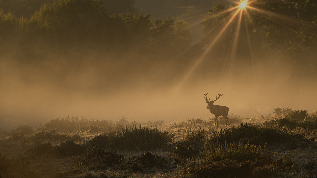 This photograph taken during the rut season shows on time I saw the 'Light'.