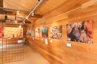 Exhibition Above Under The Coast of Charente-Maritime. Photographs by Isabelle and Amar Guillen.