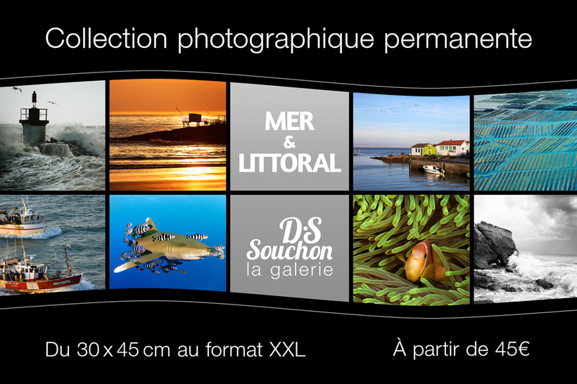 Underwater photo exhibition in Royan at the D.S Souchon gallery.