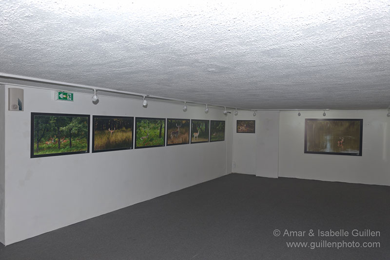 Wildlife photo exhibition 'The Lords of the forests of Charente-Maritime'
