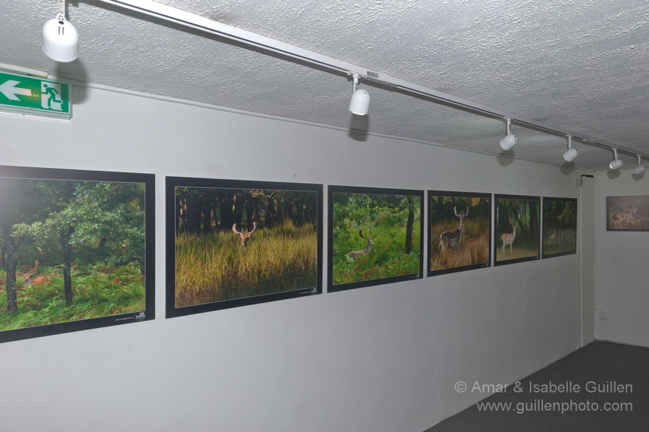 Wildlife photo exhibition 'The Lords of the forests of Charente-Maritime'.