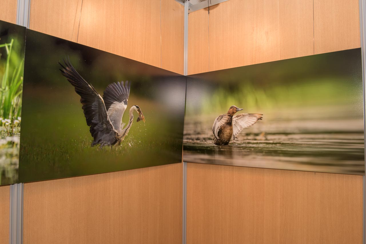 L'exposition 'The exhibition 'Atmospheres on the ponds of the Dombes' was installed during the international nature festival of Montier en Der in November 2017.