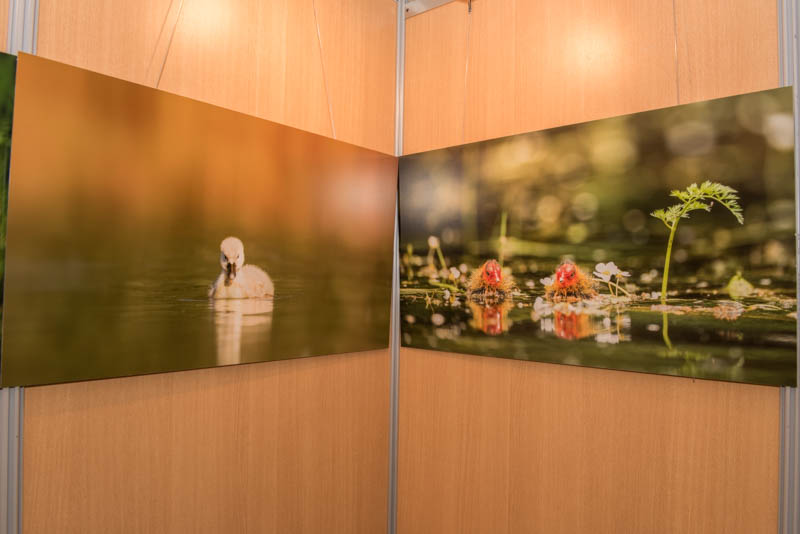 The exhibition 'Atmospheres on the ponds of the Dombes' was installed during the international nature festival of Montier en Der in November 2017.
