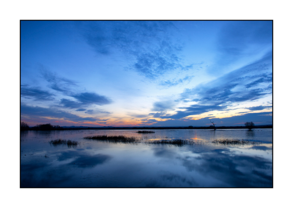 Blue dawn on the wetlands of Bosque Del Apache