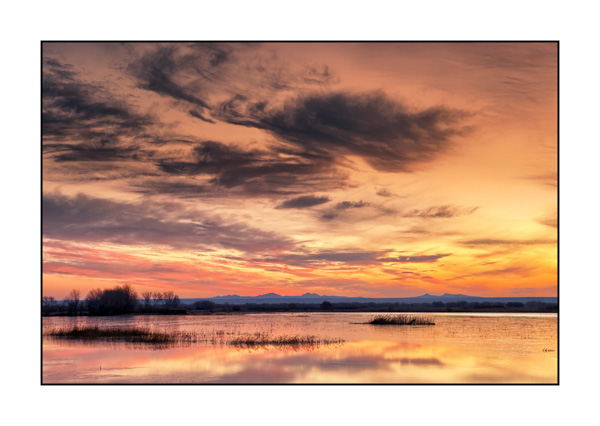 Flamboyant dawn on the wetlands of Bosque Del Apache