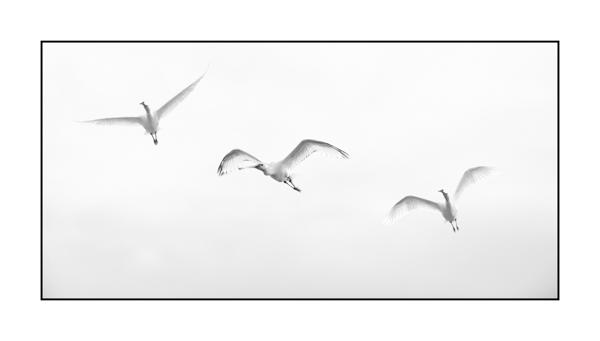 Libres BW XII