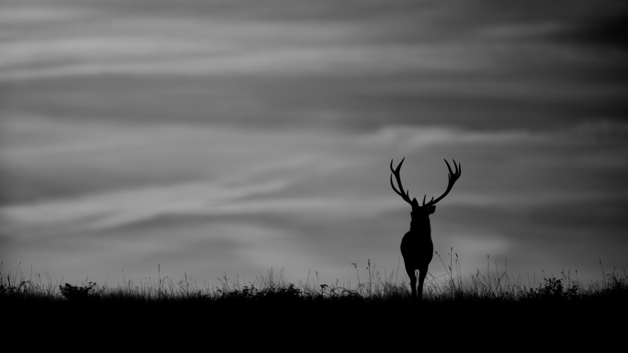 Silhouette of a red deer stag in Charente-Maritime in France. Photograph by Amar Guillen, photographer artist.