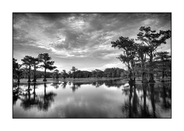 Caddo Lake in Texas BW I