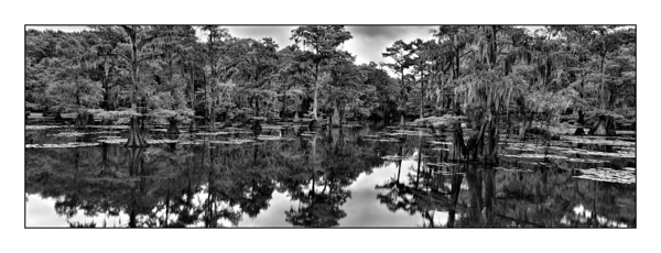 Caddo Lake in Texas BW IV