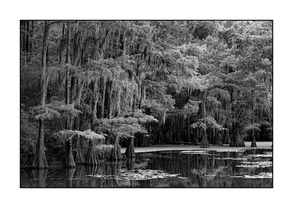 Caddo Lake in Texas BW V