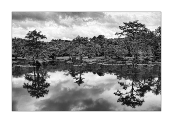 Caddo Lake in Texas BW VI