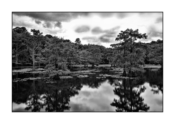 Caddo Lake in Texas BW VII