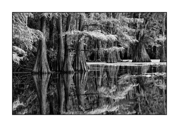Caddo Lake in Texas BW X