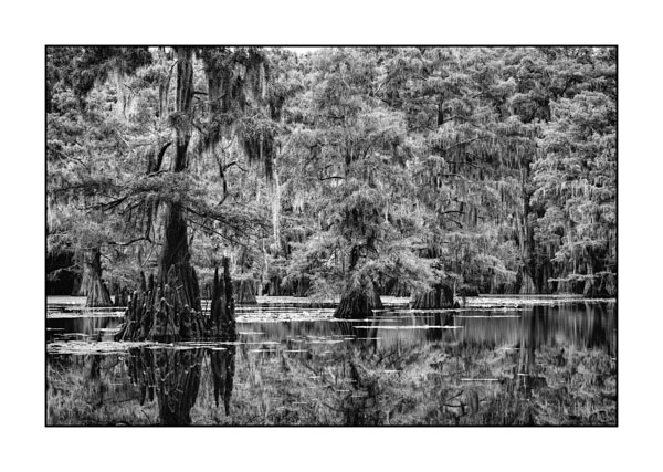 Caddo Lake in Texas BW XII