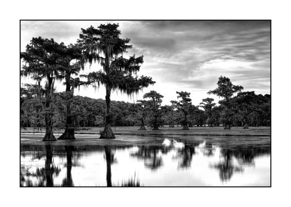 Caddo Lake in Texas BW XIII