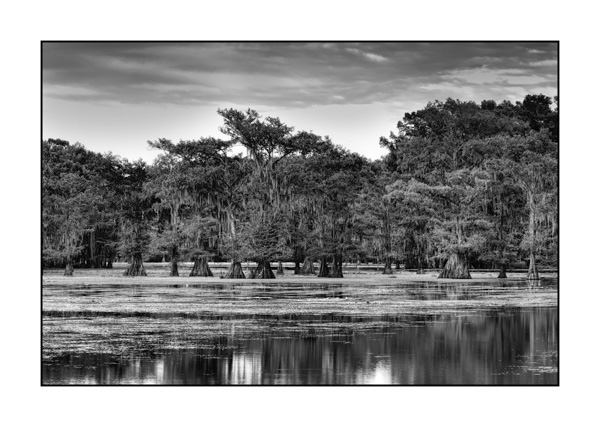 Caddo Lake in Texas BW XIV