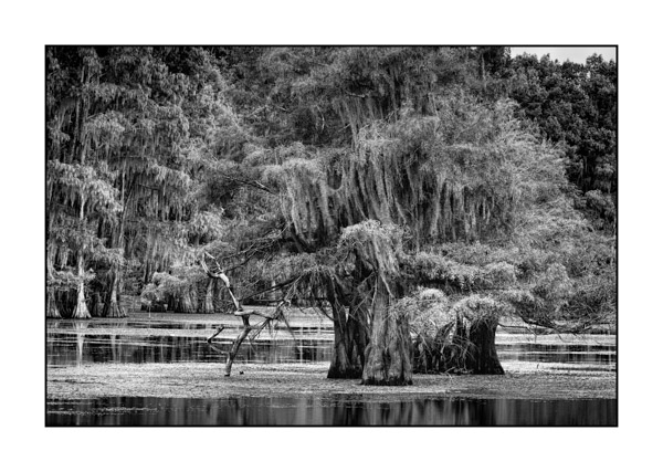 Caddo Lake in Texas BW XV
