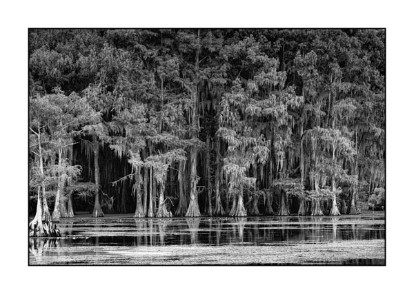 Caddo Lake in Texas BW XVI