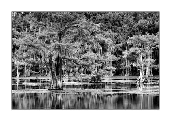 Caddo Lake in Texas BW XVII