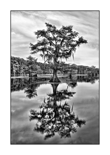 Caddo Lake in Texas BW XVIII