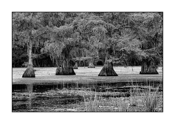 Caddo Lake in Texas BW XXI