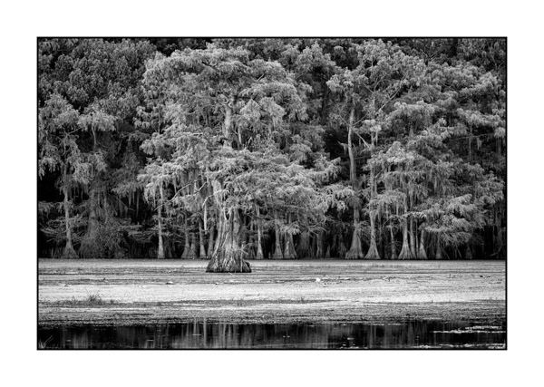 Caddo Lake in Texas BW XXII