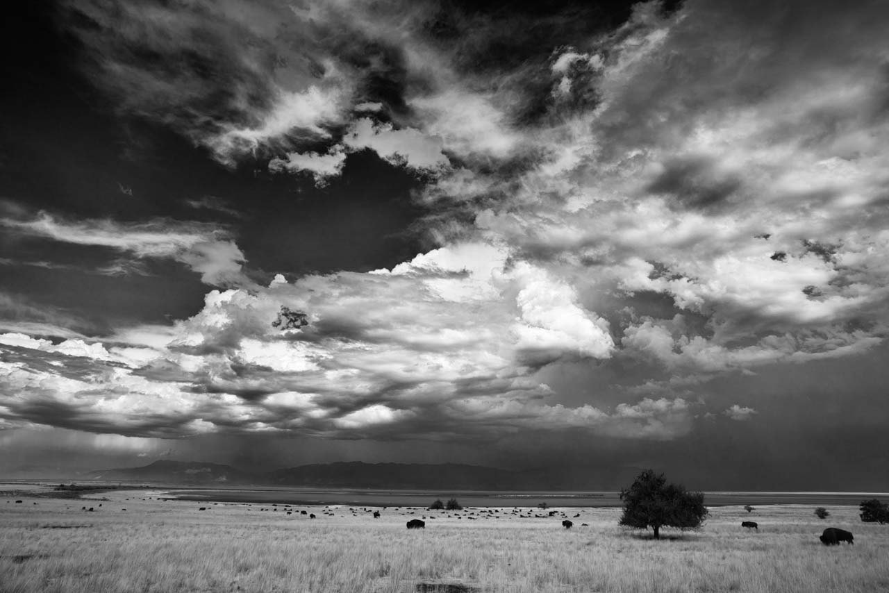 Landscape photo in black and white of Antelope Island in Utah under a storm. Photograph by Amar Guillen, photographer artist.