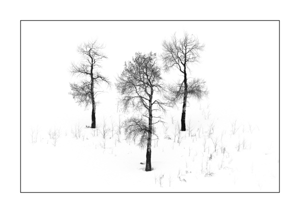 Snowy Landscape of Yellowstone in Black and White