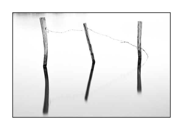 Stakes with barbed wire in high key and black and white in a flooded meadow.