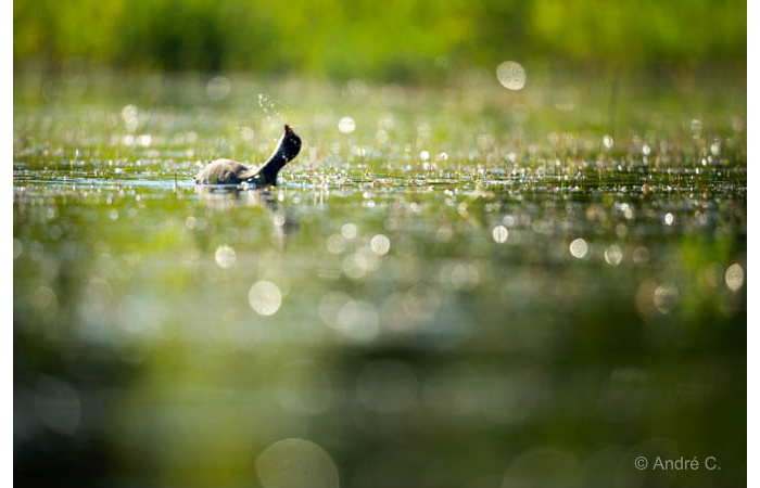 Photo taken from a floating blind during a wildlife photo workshop