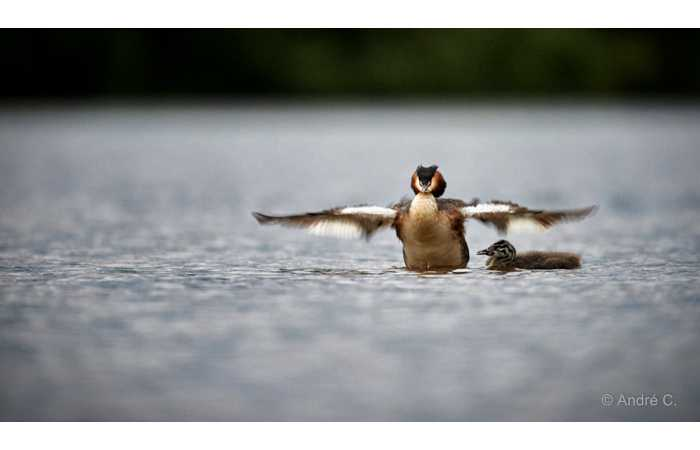 stage-photo-animaliere-affut-flottant-en-dombes-andre-3