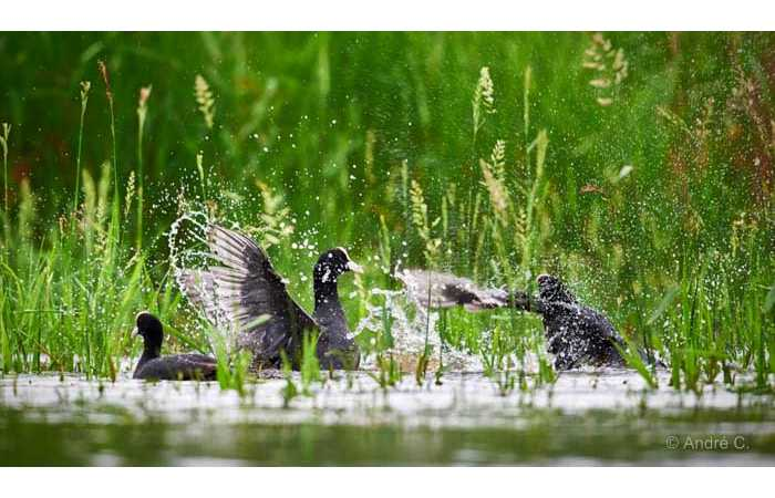 stage-photo-animaliere-affut-flottant-en-dombes-andre-7