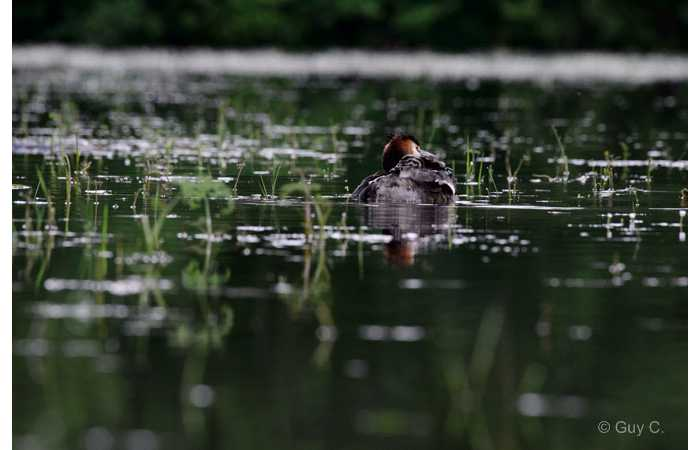 stage-photo-animaliere-affut-flottant-en-dombes-guy-6