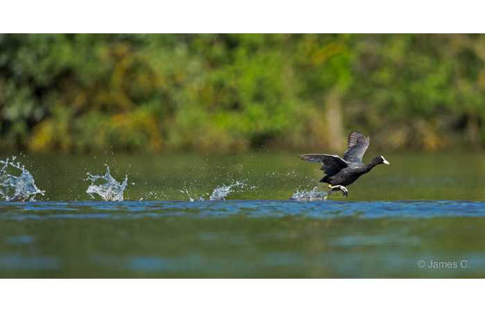 stage-photo-animaliere-affut-flottant-en-dombes-james-3