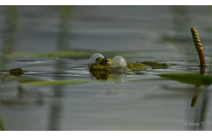 stage-photo-animaliere-affut-flottant-en-dombes-alain-2