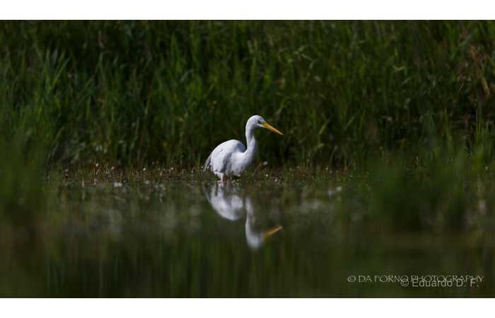 stage-photo-animaliere-affut-flottant-en-dombes-eduardo