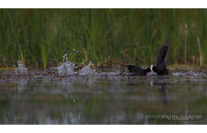 stage-photo-animaliere-affut-flottant-en-dombes-eduardo-3