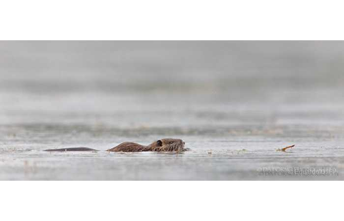 stage-photo-animaliere-affut-flottant-en-dombes-eduardo-4