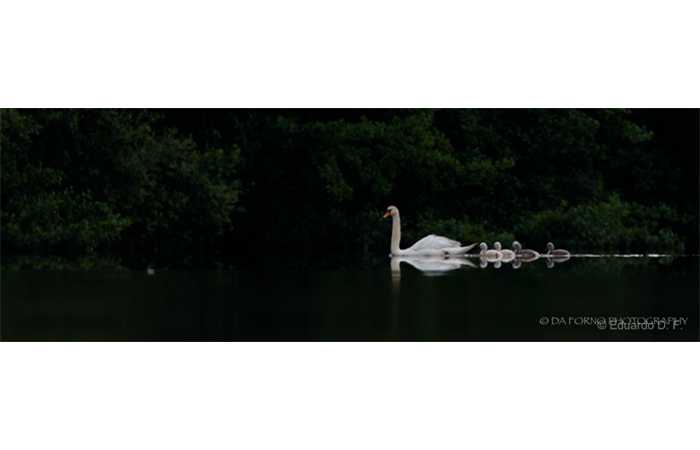 stage-photo-animaliere-affut-flottant-en-dombes-eduardo-6