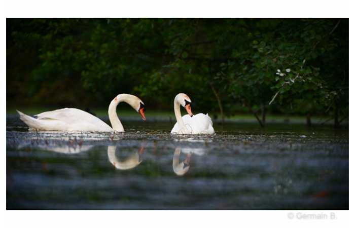 stage-photo-animaliere-affut-flottant-en-dombes-germain